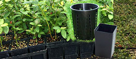 Blueberry Pots Category - Blueberry Growing Supplies - For more information go to GrowingBlueberries.com.au