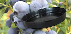 Blueberry Growing Saucer / Drip Tray Category - Blueberry Growing Supplies - For more information go to GrowingBlueberries.com.au