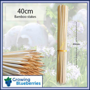 Blueberry Growing Bamboo Sticks 40cm - Blueberry Growing Supplies - For more information go to GrowingBlueberries.com.au