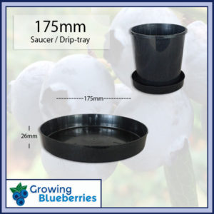 Blueberry plant pot saucer - drip tray - Blueberry Growing Supplies - For more information go to GrowingBlueberries.com.au